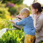 Blue poppies shine at Gardening Scotland Tom Smart